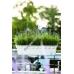 Балконный вазон EMSA PALAZZO 50х22х18 см (Белый)