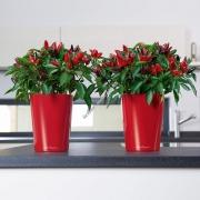 LECHUZA Mini Deltini Premium Ярко красный