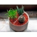 SERAMIS Cубстрат специальный для кактусов и суккулентов 2и5 л